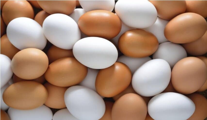 Egg great source of proteins and biotin