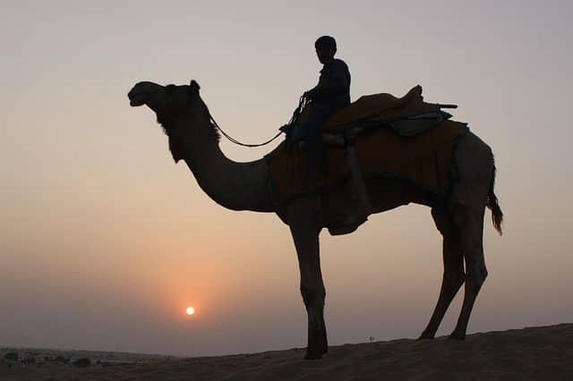 Evening Desert Safari with Dinner